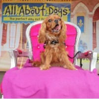 All About Dogs Show Essex 2020