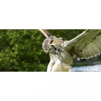 Birds of Prey and Conservation Centre