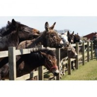 Redwings Horse Sanctuary - Caldecott Visitor Centre