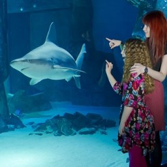 Sea Life London Aquarium Places To Visit What To Do With The Kids